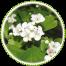 "<a href=""http://www.euromedweb.com/euromed/hawthorn-dry-extract/"">Hawthorn Dry Extract</a>"