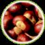 "<a href=""http://www.euromedweb.com/euromed/horse-chestnut-dry-extract/"">Horse Chestnut Dry Extract</a>"