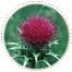 "<a href=""http://www.euromedweb.com/euromed/milk-thistle-dry-extract/"">Milk Thistle Dry Extract</a>"
