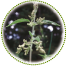 "<a href=""http://www.euromedweb.com/euromed/nettle-root-dry-extract/"">Nettle Root Dry Extract</a>"