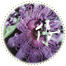 "<a href=""http://www.euromedweb.com/euromed/passion-flower-dry-extract/"">Passion Flower Dry Extract</a>"