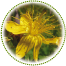 "<a href=""http://www.euromedweb.com/euromed/st-johns-wort-dry-extract/"">St. John's Wort Dry Extract</a>"