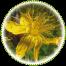"<a href=""http://www.euromedweb.com/euromed/st-johns-wort-dry-extract/"">St. John's Wort Dry Extract</a>"