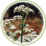 "<a href=""http://www.euromedweb.com/euromed/valerian-dry-extract/"">Valerian Dry Extract</a>"