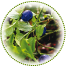 "<a href=""http://www.euromedweb.com/euromed/bilberry-dry-extract/"">Bilberry Dry Extract</a>"
