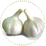 "<a href=""http://www.euromedweb.com/euromed/garlic-extracts/"">Garlic Extracts</a>"