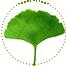 "<a href=""http://www.euromedweb.com/euromed/ginkgo-biloba-dry-extract/"">Ginkgo Biloba Dry Extract</a>"