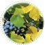 "<a href=""http://www.euromedweb.com/euromed/grape-seed-extract/"">Grape Seed Extract</a>"