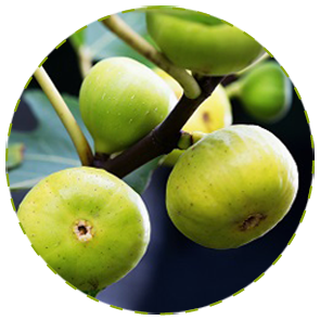 "<a href=""http://www.euromedweb.com/euromed/abalife/"">Fig Fruit Extract</a>"